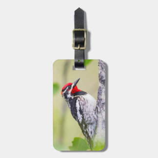 Wyoming, Sublette County, Red-naped Sapsucker Bag Tag