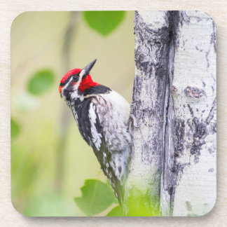 Wyoming, Sublette County, Red-naped Sapsucker Beverage Coaster