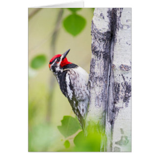Wyoming, Sublette County, Red-naped Sapsucker Card