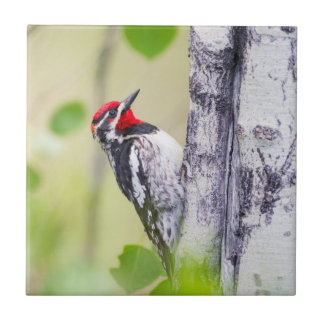 Wyoming, Sublette County, Red-naped Sapsucker Ceramic Tile