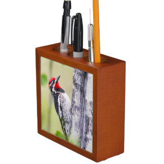 Wyoming, Sublette County, Red-naped Sapsucker Desk Organizer