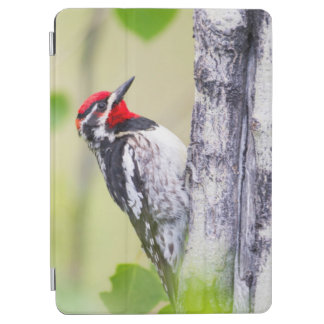 Wyoming, Sublette County, Red-naped Sapsucker iPad Air Cover