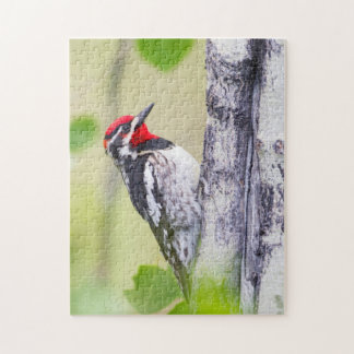 Wyoming, Sublette County, Red-naped Sapsucker Jigsaw Puzzle