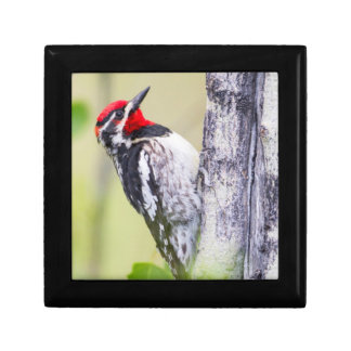 Wyoming, Sublette County, Red-naped Sapsucker Keepsake Box