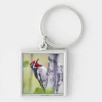 Wyoming, Sublette County, Red-naped Sapsucker Keychain