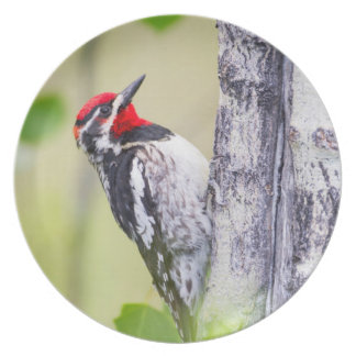 Wyoming, Sublette County, Red-naped Sapsucker Melamine Plate