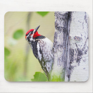 Wyoming, Sublette County, Red-naped Sapsucker Mouse Pad