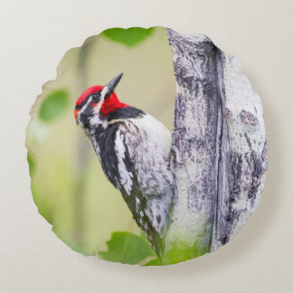 Wyoming, Sublette County, Red-naped Sapsucker Round Pillow