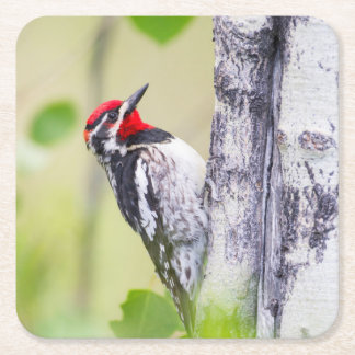 Wyoming, Sublette County, Red-naped Sapsucker Square Paper Coaster
