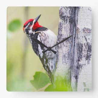 Wyoming, Sublette County, Red-naped Sapsucker Square Wall Clock