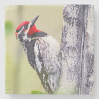 Wyoming, Sublette County, Red-naped Sapsucker Stone Coaster