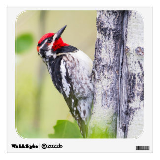 Wyoming, Sublette County, Red-naped Sapsucker Wall Sticker