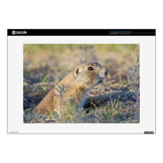 Wyoming, Sublette County, White-tailed Prairie 1 Laptop Decal