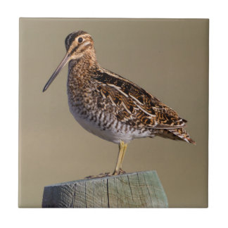 Wyoming, Sublette County, Wilson's Snipe Tile