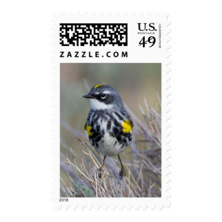 Wyoming, Sublette County, Yellow-rumped Warbler Postage Stamp