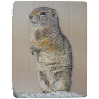 Wyoming, Uintah Ground Squirrel standing on hind iPad Smart Cover