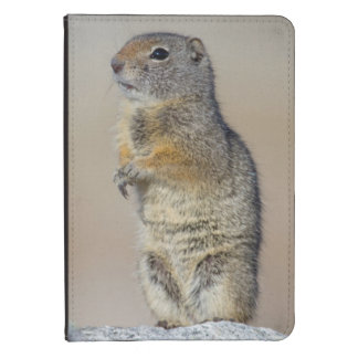 Wyoming, Uintah Ground Squirrel standing on hind Kindle Touch Cover