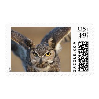 Wyoming, USA Postage Stamp