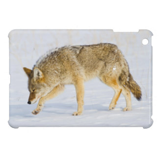 Wyoming, Yellowstone National Park, Coyote Case For The iPad Mini