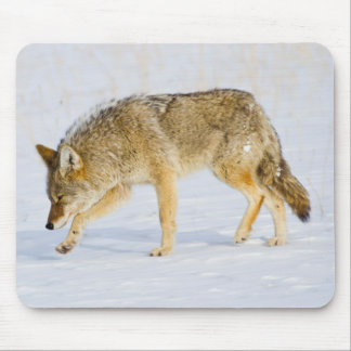 Wyoming, Yellowstone National Park, Coyote Mouse Pad