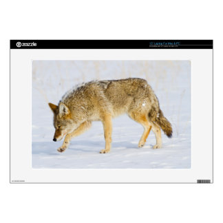 """Wyoming, Yellowstone National Park, Coyote Skin For 15"""" Laptop"""