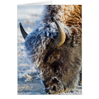 Wyoming, Yellowstone National Park, Frost Card