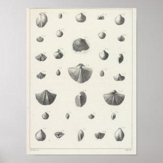 X Carboniferous Print