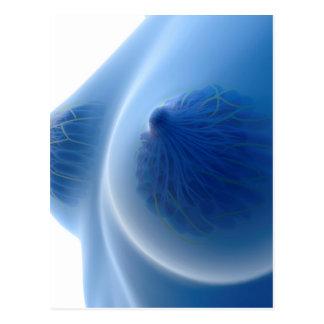 X-Ray Image Of Female Breast Anatomy Postcard