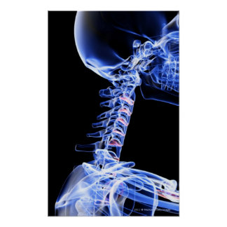 X-ray image of the bones of the neck poster