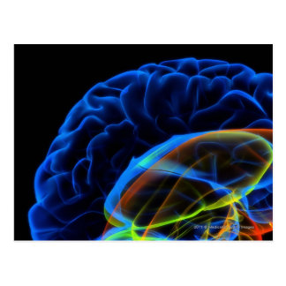 X-ray image of the brain postcards