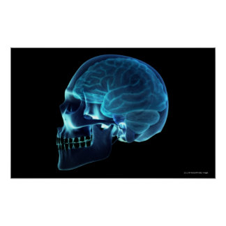 X-ray of the brain inside a skull print