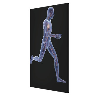 X-ray of the vascular system in a running man canvas print