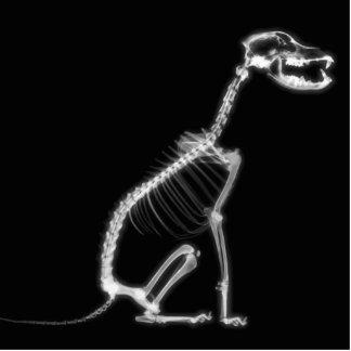 X-RAY PUPPY DOG SKELETON SITTING - B&W CUTOUT