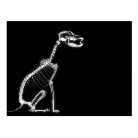X-RAY PUPPY DOG SKELETON SITTING - B&W POSTCARD