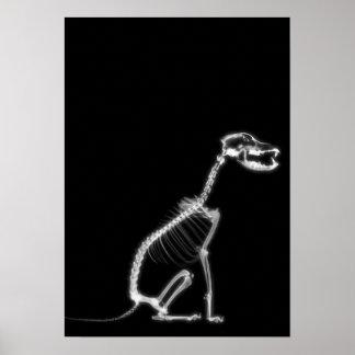 X-RAY PUPPY DOG SKELETON SITTING - B&W POSTER