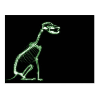 X-RAY PUPPY DOG SKELETON SITTING - GREEN POSTCARD