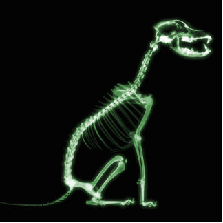 X-RAY PUPPY DOG SKELETON SITTING - GREEN STATUETTE