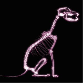 X-RAY PUPPY DOG SKELETON SITTING - PINK CUT OUTS