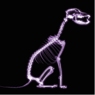X-RAY PUPPY DOG SKELETON SITTING - PURPLE CUT OUTS