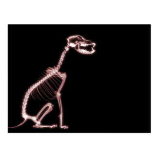 X-RAY PUPPY DOG SKELETON SITTING - RED POSTCARD