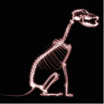 Halloween Themed X-RAY PUPPY DOG SKELETON SITTING - RED STATUETTE