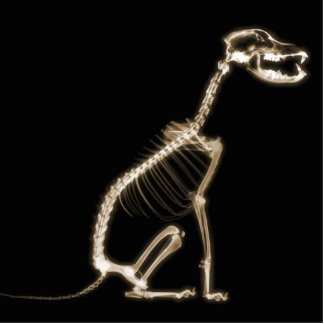 X-RAY PUPPY DOG SKELETON SITTING - SEPIA ACRYLIC CUT OUT