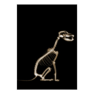 X-RAY PUPPY DOG SKELETON SITTING - SEPIA POSTERS