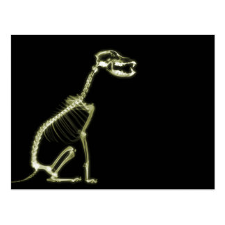 X-RAY PUPPY DOG SKELETON SITTING - YELLOW POSTCARD