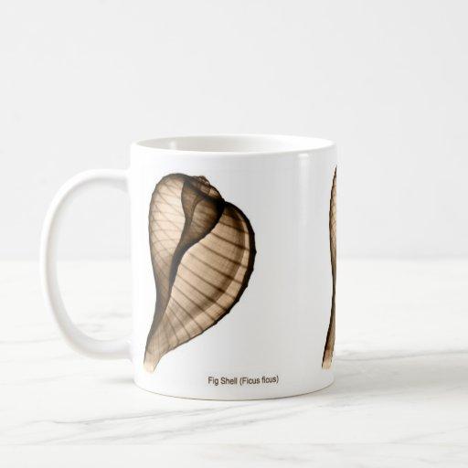 X-Ray Seashell Mug of Fig Shell, Ficus ficus