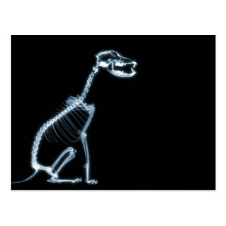 X-RAY SKELETON DOG SITTING - BLUE & BLACK POSTCARD