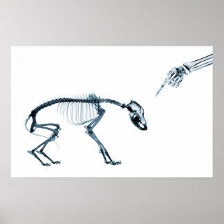 X-Ray Skeletons Blue Bad Dog Poster