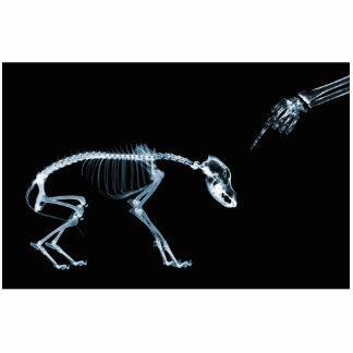 X-Ray Skeletons Blue Bad Dog Statuette