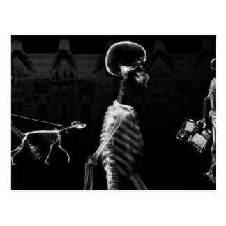 X-Ray Skeletons Midnight Stroll Black White Postcard