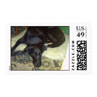 Xander Dog Postage